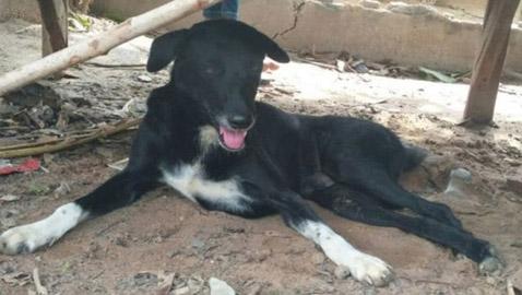 قصة الكلب الأعرج الذي أنقذ رضيعا دُفن حيا..
